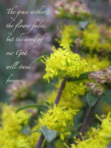 Flower photo 2